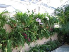 Living wall with large clay pots of fern and orchids using hangapot, the hidden flower pot hanger.  Great gift for gardeners. Made in America!  www.hangapot.com  9 hangers for $29.95