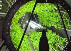 Awesome hydroponic system for growing food. Engineering efficiency.