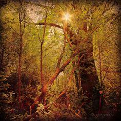 sunshine in trees