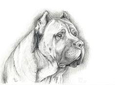 Ciao a tutti cane corso dogs