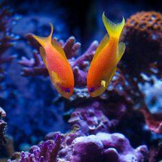Deep Under The Ocean