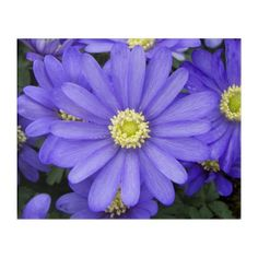 Purple Anemones Floral Acrylic Wall Art - floral gifts flower flowers gift ideas