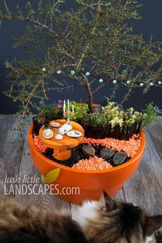 The blogger behind Lush Little Landscapes put her garden in a orange painted pot so that it can serve as a centerpiece for a holiday dinner party. Check out more about these Halloween Fairy Gardens!