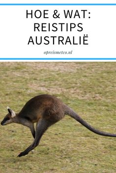 Wat moet je allemaal weten voor je eerste reis naar Australië? In deze blog al mijn reistips voor dit fijne land.