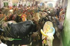Shrinathji gaushasla