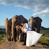 Wedding Venues South Africa Events Ideas For 2019 Cape Town Wedding Venues, Beautiful Wedding Venues, Safari Wedding, Blue Wedding, Wedding Flowers, Dream Wedding, Wedding Dresses, Game Lodge, South African Weddings
