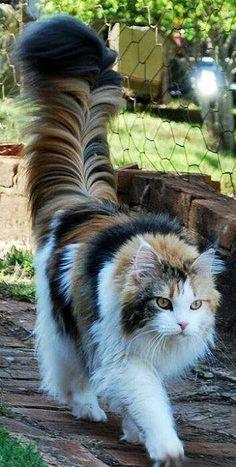 Lindo gatito.