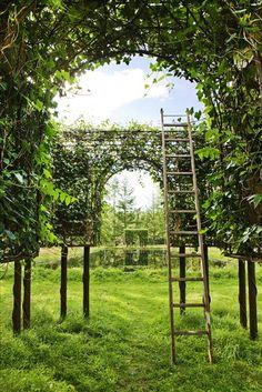 Beautiful espalier, what a nice secret garden.