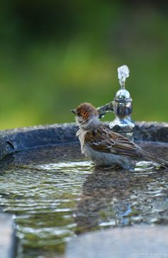Do forget to put what out for wildlife during the warm weather! #homesfornature