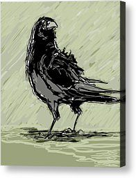 Crow Drawing Canvas Prints - Crow in Rain Canvas Print by Peggy Wilson