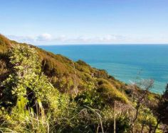 These weekend walks will bring you delight and feed your soul—they're the best hikes and walks in Auckland. The Beautiful Country, Best Hikes, Travel List, New Adventures, Auckland, New Zealand, Places To See, Things To Do, Hiking