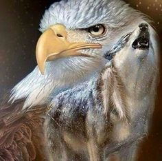 Feed the wolf inside you. Eagle Pictures, Wolf Pictures, Bird Pictures, Wolf Images, Wolf Photos, Native American Paintings, Native American Pictures, Eagle Artwork, Wolf Spirit Animal