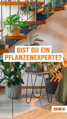 Best Practice, Shadow Plants, Short Plants, Orchid Care, Riddles, House Plants, Orchids, Cactus, Succulents