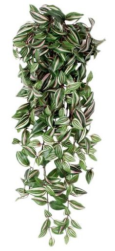 9 Stupefying Cool Tips: Large Artificial Plants Beautiful artificial plants diy home decor.Artificial Garden Ideas Green Walls large artificial plants home.Artificial Plants Diy Home Decor. Ivy Plant Indoor, Big Indoor Plants, Small Artificial Plants, Artificial Plant Wall, Fake Plants Decor, Ivy Plants, Real Plants, Foliage Plants, Hanging Plants