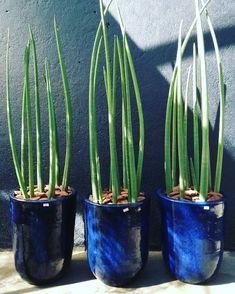 Indoor Tropical Plants, Potted Plants, Cactus Plants, Large Plant Pots, Container Gardening, Planter Pots, Landscape, Diy, Design