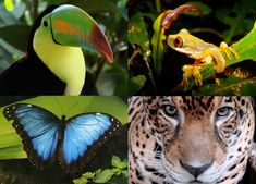 Astonishing rainforest wildlife.