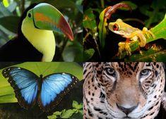 Astonishing rainforest wildlife.