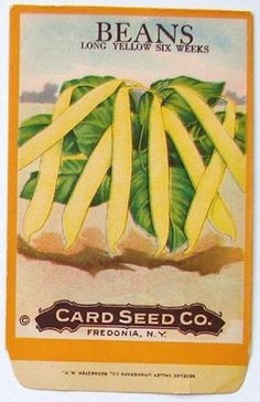 BEANS, Long Yellow Six Weeks, Antique Seed Packet, o