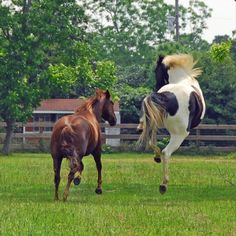 amo los caballos