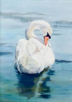 Swans have fascinated people since ancient times. The proud bearing and monogamous relationship of swans have been the theme of many stories. Watercolor Feather, Watercolor Animals, Watercolor Paintings, Watercolour, Pictures To Paint, Art Pictures, Animal Paintings, Animal Drawings, Swan Painting