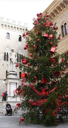 Italia - Italy - Tuscany - Toscana - A Christmas tree in Siena, Italy