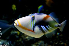 colorful fish   Colorful Fish-::-   Flickr