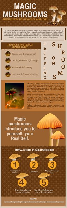 Magic mushrooms are agents of change. They can mediate an inner conversation with your subconscious. They destroy the house where your ego stays and r Edible Mushrooms, Stuffed Mushrooms, How To Grow Shrooms, Growing Psychedelic Mushrooms, Oyster Mushroom Spawn, Nft Hydroponics, Legal Psychedelics, Growing Mushrooms At Home, Psilocybin Mushroom