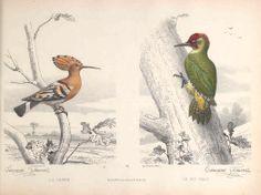 Types du règne animal. Buffon en estampes / - Biodiversity Heritage Library