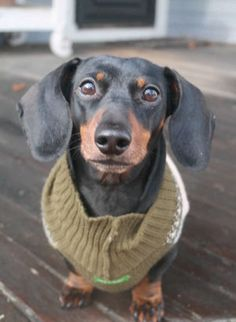 Who can resist Sadie's soulful eyes? #pets