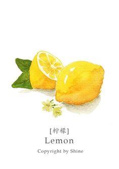 illustration。Food drawing。 More Lemon Watercolor, Watercolor Fruit, Fruit Painting, Watercolor Drawing, Watercolor Illustration, Watercolor Cards, Lemon Art, Watercolor Projects, Guache
