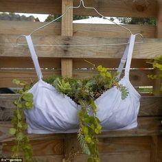Bra-vo: An ingenious use of women's underwear makes for an unusual plant pot Diy Planters, Flower Planters, Planter Ideas, Bat Flower, Alpine Strawberries, Planting For Kids, Sensitive Plant, Strawberry Planters, Large Flower Pots