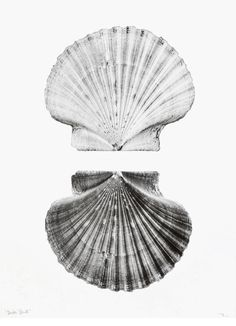 Double Shell Print