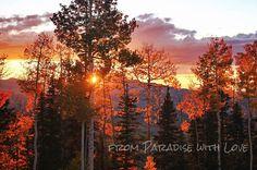 Fall Sunset, Mountains - Colorado Photography - Gold - Autumn - Aspen Trees. $10.00, via Etsy.