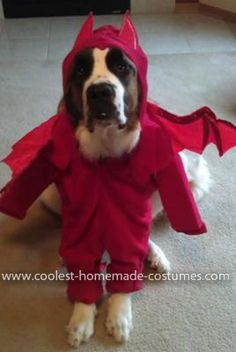 Homemade Devil Dog Costume... This website is the Pinterest of pet halloween costumes