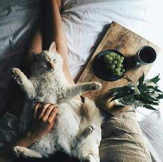 ✨ Pinterest: ash_ january