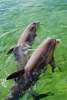 Dolphins Love