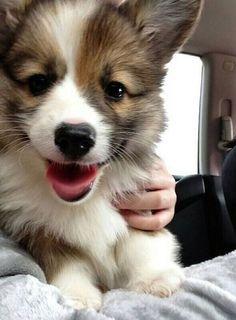 Hey, little buddy!