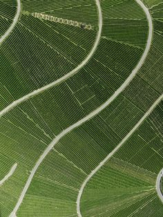Vineyard Grün (Field 03 - Cultured Land) Stephan Zirwes - Best of Pins! Aerial Photography, Landscape Photography, Stunning Photography, Scenic Photography, Night Photography, Landscape Photos, Map Quilt, Aerial Images, Aerial Arts