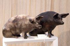 pigs Julia Hulmes