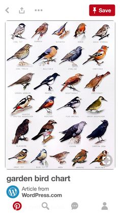 bird chart You are in the right place about wild Birds Here we offer you the most beautiful pictures about the colorful Birds you are looking for. When you examine the bird chart part of the picture y Pretty Birds, Love Birds, Beautiful Birds, Birds 2, Small Birds, Glass Birds, Birds Of Prey, Beautiful Places, Beautiful Pictures