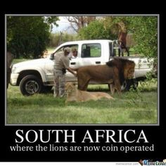 South Africa where the lions are now coin operated #lion #southafrica #safari - Enjoy the Shit South Africans Say! #CapeTown #africa #comedy #humor #braai #afrikaans