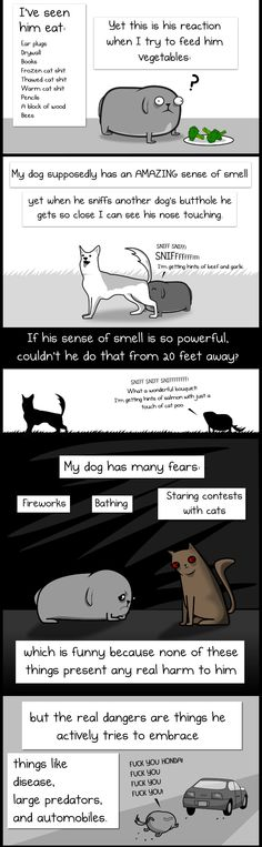 My Dog: The Paradox By The Oatmeal | JinSpiration
