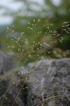 Hannah Nunn: Meadowland #grasses 'grass #meadow #hairgrass