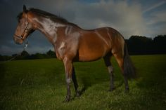 Fine Art Equestrian Portraits and Stable Visits - Horse Photographer UK Great Memories, Stables, Family Portraits, Equestrian, Horses, Fine Art, Animals, Family Posing, Animales
