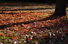 落ち葉の画像(写真)