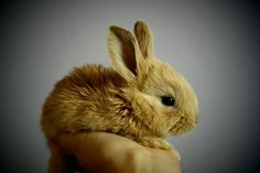 The Dutch government is working to phase out all animal experiments!