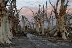 Villa Epecuen, an old tourist town south of Buenos Aires that spent a quarter of a century underwater.