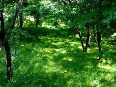 野山北・六道山公園 NOYAMAKITA・ROKUDOYAMA PARK@ tokyo http://www.sayamaparks.com/noyama/ ©tomoko