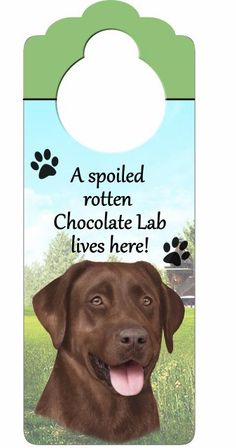 Chocolate Labrador - need this for Remi!