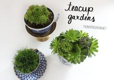 These little DIY teacup gardens with succulents are simple and sweet!